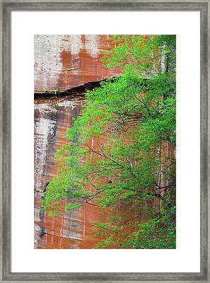 Tree With Red Canyon Wall Framed Print by Joseph Smith