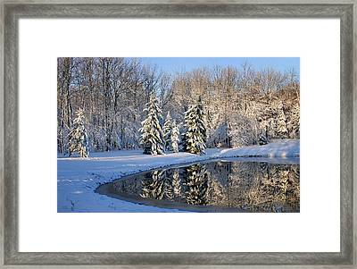 Treeflections Framed Print by Kristin Elmquist