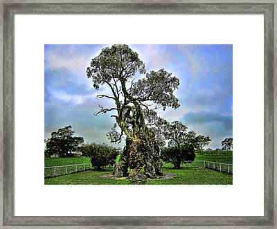 Treehouse Framed Print by Douglas Barnard