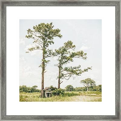 Treehugger Framed Print by Humboldt Street