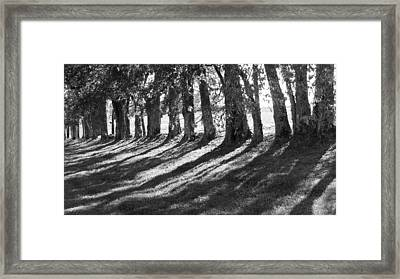 Treeline Framed Print by Amy Tyler