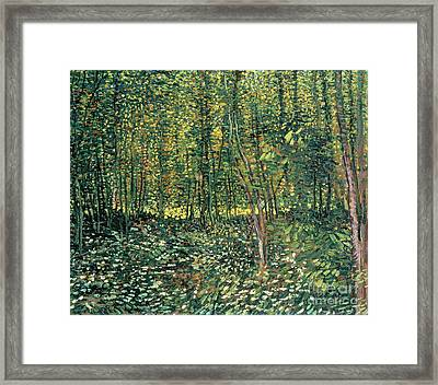 Trees And Undergrowth Framed Print by Vincent Van Gogh