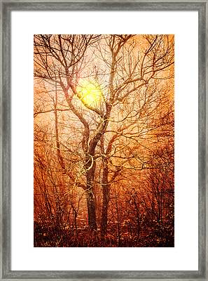 Trees At Sunset Framed Print by Debra and Dave Vanderlaan