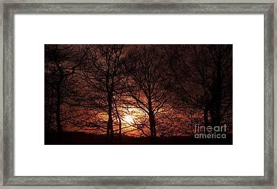 Trees At Sunset Framed Print by Michal Boubin