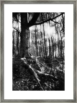 Trees At The Entrance To The Valley Of No Return Framed Print by Simon Marsden