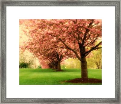 Trees In A Row Framed Print by Angie Tirado