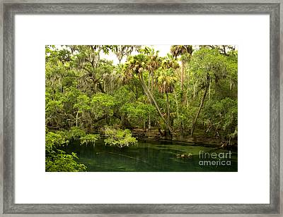 Trees In Blue Spring State Park Framed Print by Inga Spence