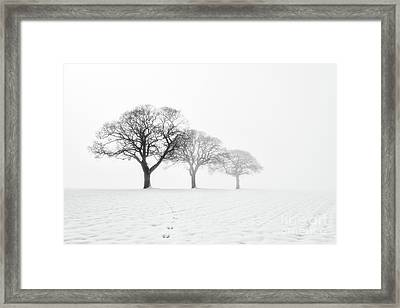 Trees In The Mist Framed Print by Janet Burdon