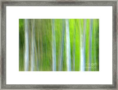 Trees Framed Print by Silke Magino