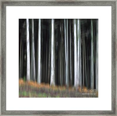 Trees Trunks Framed Print by Bernard Jaubert