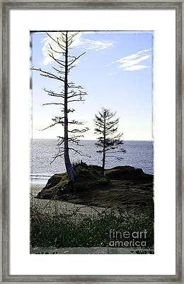 Trees With Character Framed Print by Beverly Guilliams