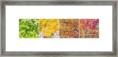 Treetastic Framed Print by Tim Gainey