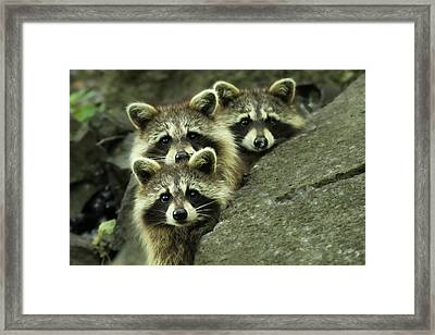 Tres Banditos Framed Print by Mircea Costina Photography