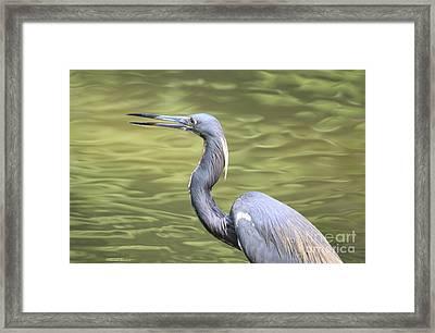 Tri Heron On Silk Framed Print by Deborah Benoit