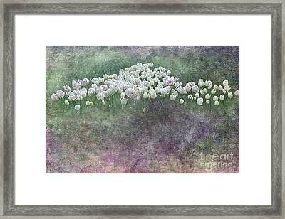 Triangle Of White Tulips By Kaye Menner Framed Print by Kaye Menner