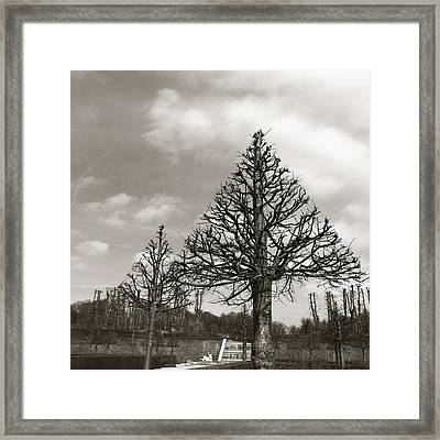 Triangle Trees Framed Print by Linda Woods