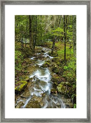 Tributary Back Fork Of Elk River Framed Print by Thomas R Fletcher