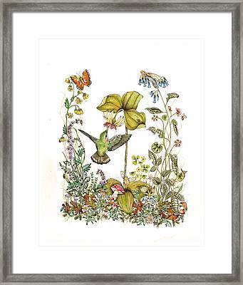 Trillium Framed Print by Donna Genovese
