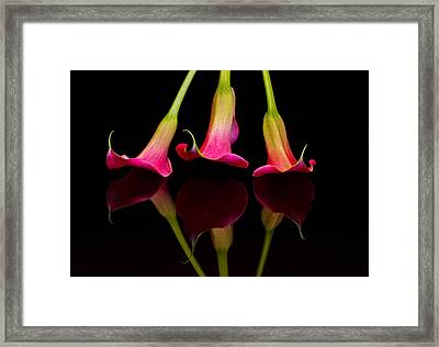 Trio Reflections Framed Print by Susan Candelario