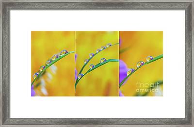 Triple Droplets Framed Print by Veikko Suikkanen