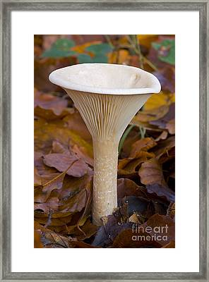 Trooping Funnel Framed Print by Steen Drozd Lund