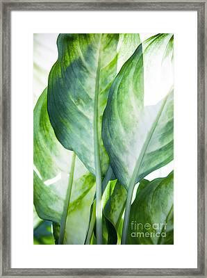 Tropic Abstract  Framed Print by Mark Ashkenazi