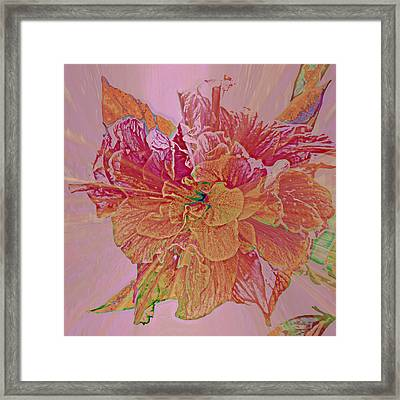 Tropical Beauty Framed Print by Rose  Hill