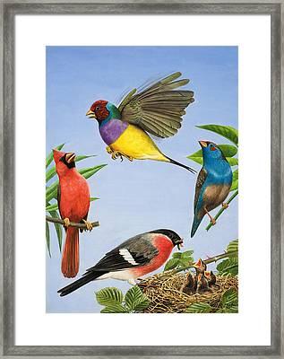 Tropical Birds Framed Print by RB Davis