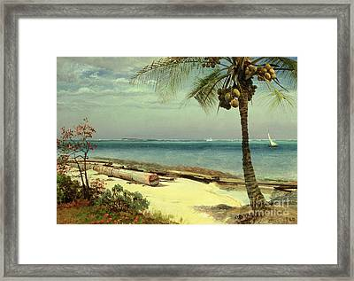 Tropical Coast Framed Print by Albert Bierstadt