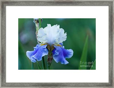 Tropical Dreams Framed Print by Beve Brown-Clark Photography