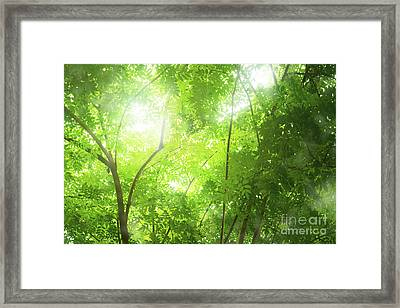 Tropical Forest Framed Print by Atiketta Sangasaeng