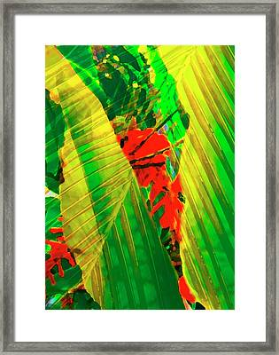 Tropical Fusion Framed Print by Stephen Anderson
