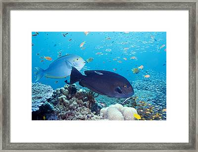 Tropical Reef Fish Framed Print by Georgette Douwma