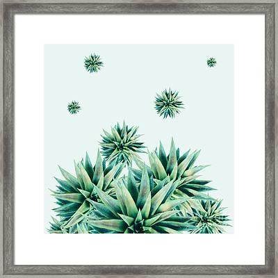 Tropical Stars  Framed Print by Mark Ashkenazi