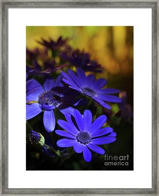 True Blue In The Late Afternoon Sunlight 2 Framed Print by Dorothy Lee