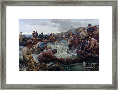 Tucking A School Of Pilchards Framed Print by Percy Robert Craft