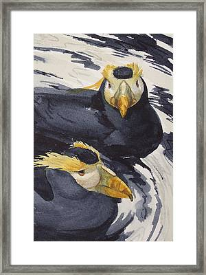 Tufted Puffins Framed Print by Kris Parins