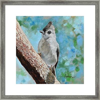 Tufted Titmouse #1 Framed Print by Amber Foote