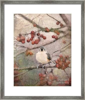 Tufted Titmouse Framed Print by Betty LaRue