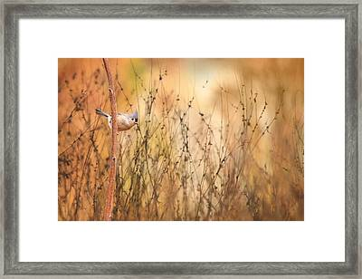 Tufted Titmouse Framed Print by Lori Deiter