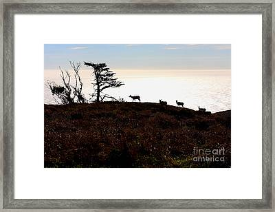 Tule Elks Of Tomales Bay Framed Print by Wingsdomain Art and Photography