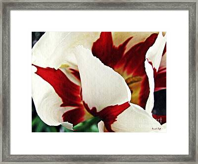 Tulip Abstract 10 Framed Print by Sarah Loft