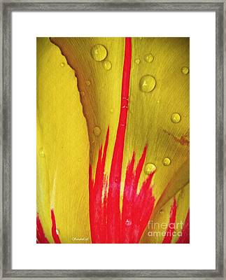 Tulip Abstract 3 Framed Print by Sarah Loft