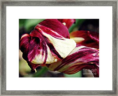 Tulip Abstract 7 Framed Print by Sarah Loft