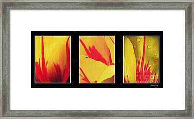 Tulip Abstract Triptych 1 Framed Print by Sarah Loft