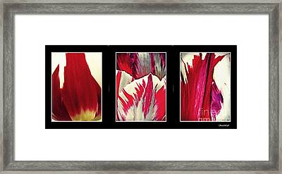 Tulip Abstract Triptych 2 Framed Print by Sarah Loft