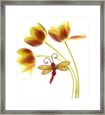Tulip Dragonfly Framed Print by Rebecca Cozart
