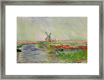 Tulip Field In Holland Framed Print by Claude Monet