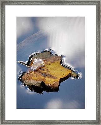 Tulip Leaf On Water Framed Print by Jane Ford