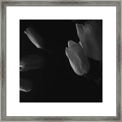 Tulip Service Framed Print by Marcus Hammerschmitt